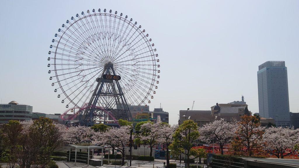 桜と観覧車(みなとみらい)